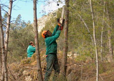 restauracion-paisajistica-desbroces